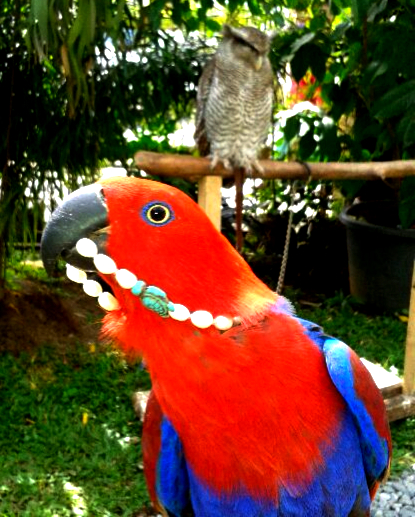 Parrot from Bandung, Indonesia